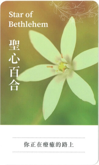 lifestyle-the-relationship-cure-with-flower-remedies-2