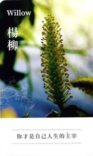 lifestyle-put-the-focus-back-on- yourself-with- flower-remedies-4